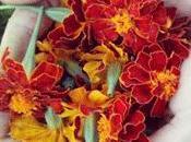 Mundo Lanar flores tintóreas