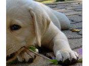 Mantén perro lejos plantas