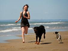 montaña rusa emociones terapias conducta perro