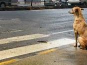 Perro sabio cruzar calle