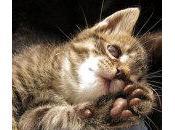 hechos sobre patas gatos