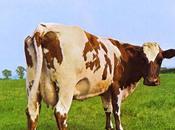 Clásico Ecos semana: Atom Heart Mother (Pink Floyd) 1970