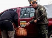 agentes protección naturaraleza APNs Gobierno Aragón intensifican vigilancia recogida setas Parque Natural Sierra Cañones Guara