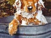 Cómo obtener pelaje reluciente para mascota