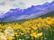 Pirineo Occidental