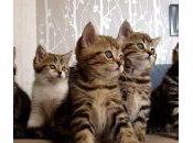 VÍDEO: Camada gatitos bailando música
