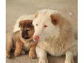 ¿Crees perros reconocen padres?