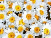 fragancia flores depende hongos bacterias recubren