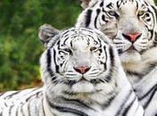 Extinción comercio ilegal Especies