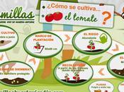 Infografía cultivo tomate
