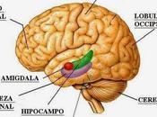 puede manipular memoria?