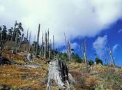 deforestación tropical distorsiona lluvias vientos todo mundo