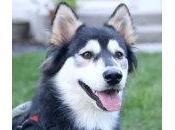 VÍDEO: perro patas deformes tiene nueva oportunidad vida