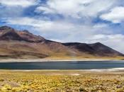 Laguna altiplánica Miñiques. Atacama. Chile