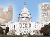 Prohibidos 'selfis' tigres otras leyes insólitas entran vigor EE.UU.
