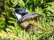 Pajareando parque taconera pamplona-birding park pamplona