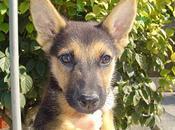 Coco, precioso cachorro adopción