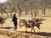 296. África positivo 2014 (II)