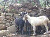 Depredadores suelo agricola
