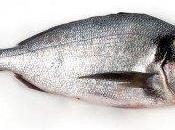 Pescado consumo habitual: semigraso