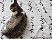 curiosidad mató gato Minnie llega Tarragona
