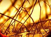 Batalla películas: Infiltrados Bosque