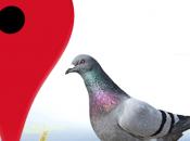 Google Local Pingeon. ¿Qué como incluirlo estrategia SEO?