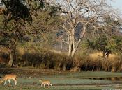 Parque Nacional Ranthambhore