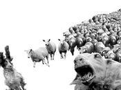 rebelión ovejas