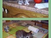 Vivir animales mejora nuestra calidad vida!!!!