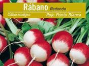 Cómo sembrar rabanitos