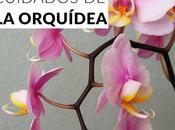 Cuidados orquídea: guía completa