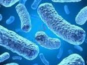 Cuidado esta bacteria puede transmitir perro gato, revés