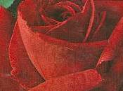 rosas también hablan
