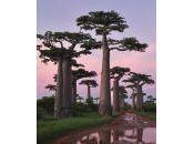Madagascar, isla roja