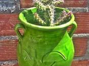 cactus enamorado