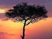 Luna miel Kenia