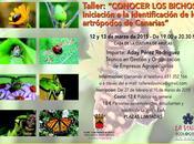 Curso Conocer bichos: Aprender identificar Artrópodos Canarias