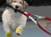 torneo Tenis Classic presenta mejores recoge pelotas mundo