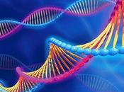 Descubren Clave Evolución Inteligencia