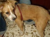 Bruno. Cachorrito abandonado busca acogida urgente.(Córdoba)