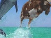 ¿Delfín Vaca?