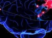 virus activan cerebro humano
