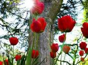 Primavera colores