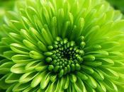 plantas tienen memoria, comunican sienten