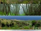 Funcionamiento ecosistema