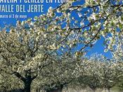 """Programa completo """"Primavera Cerezo Flor 2015"""""""