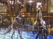 """Museum Night Fever"". noche loca museos Bruselas"