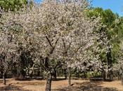 Floración Quinta Molinos