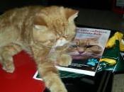 mejores libros para amantes gatos